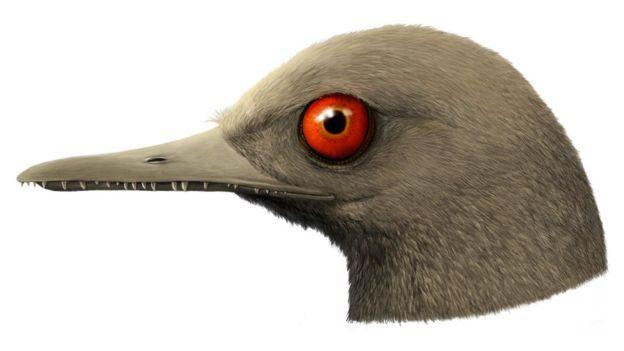 голова динозавра, Oculudentavis khaungraae