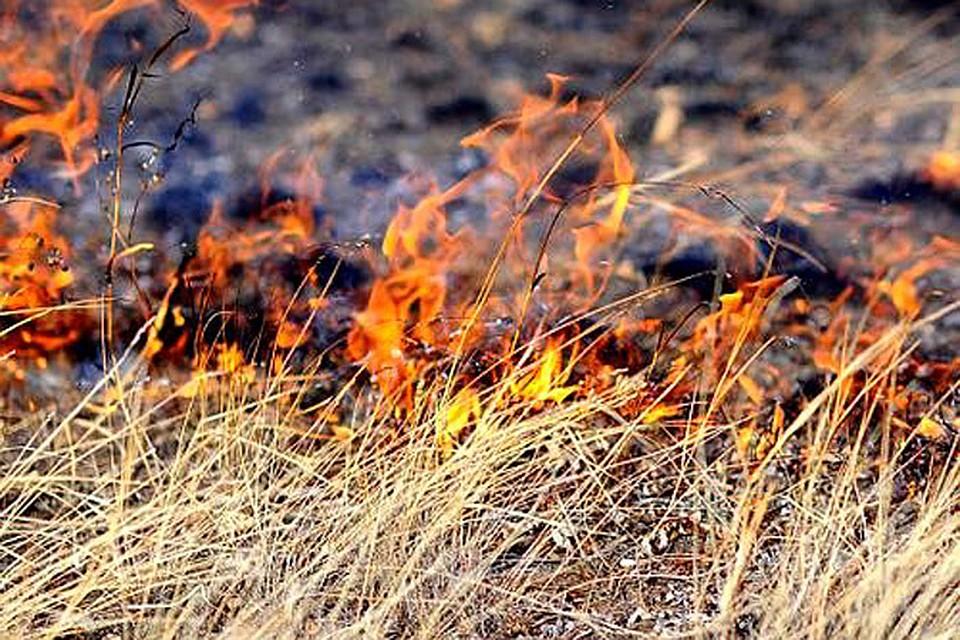 В Украине могут серьезно увеличить штрафы за сжигание листьев и травы