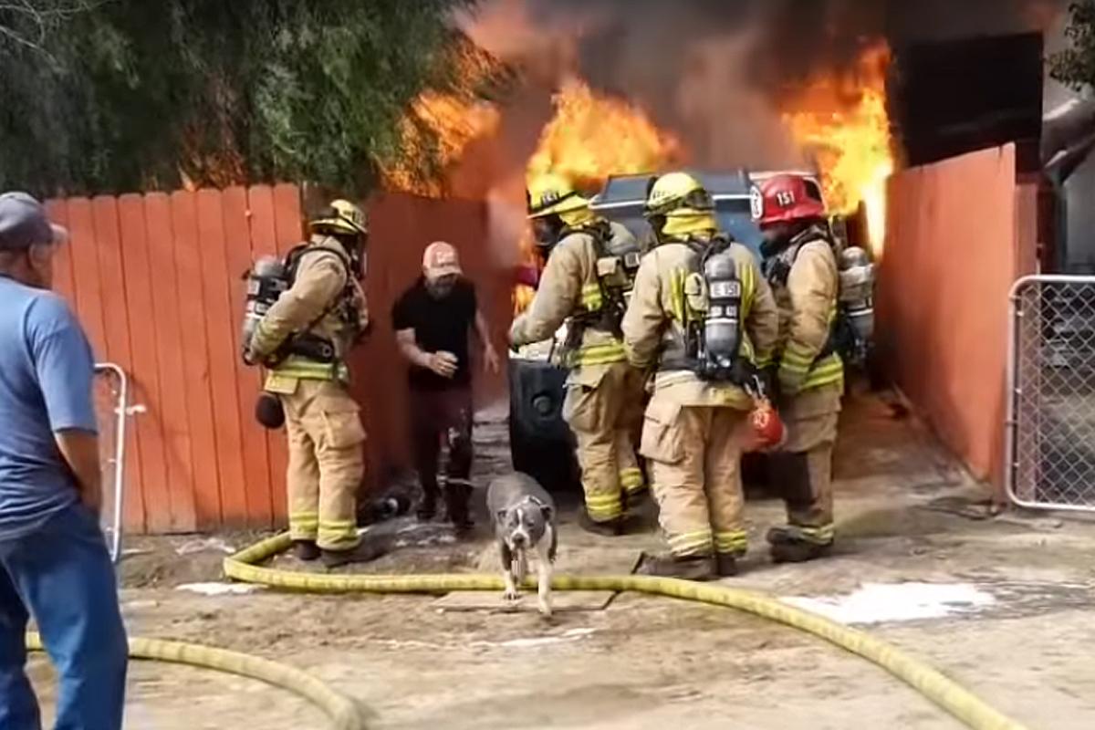 В Калифорнии мужчина вбежал в горящий дом, чтобы спасти пса