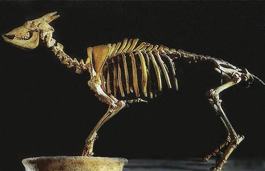 Биологи выяснили, что вымершие козлы вели себя как рептилии