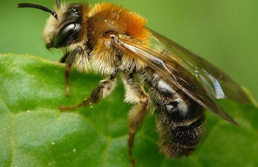 В Тайване врачи достали из глаза женщины четырех живых пчел