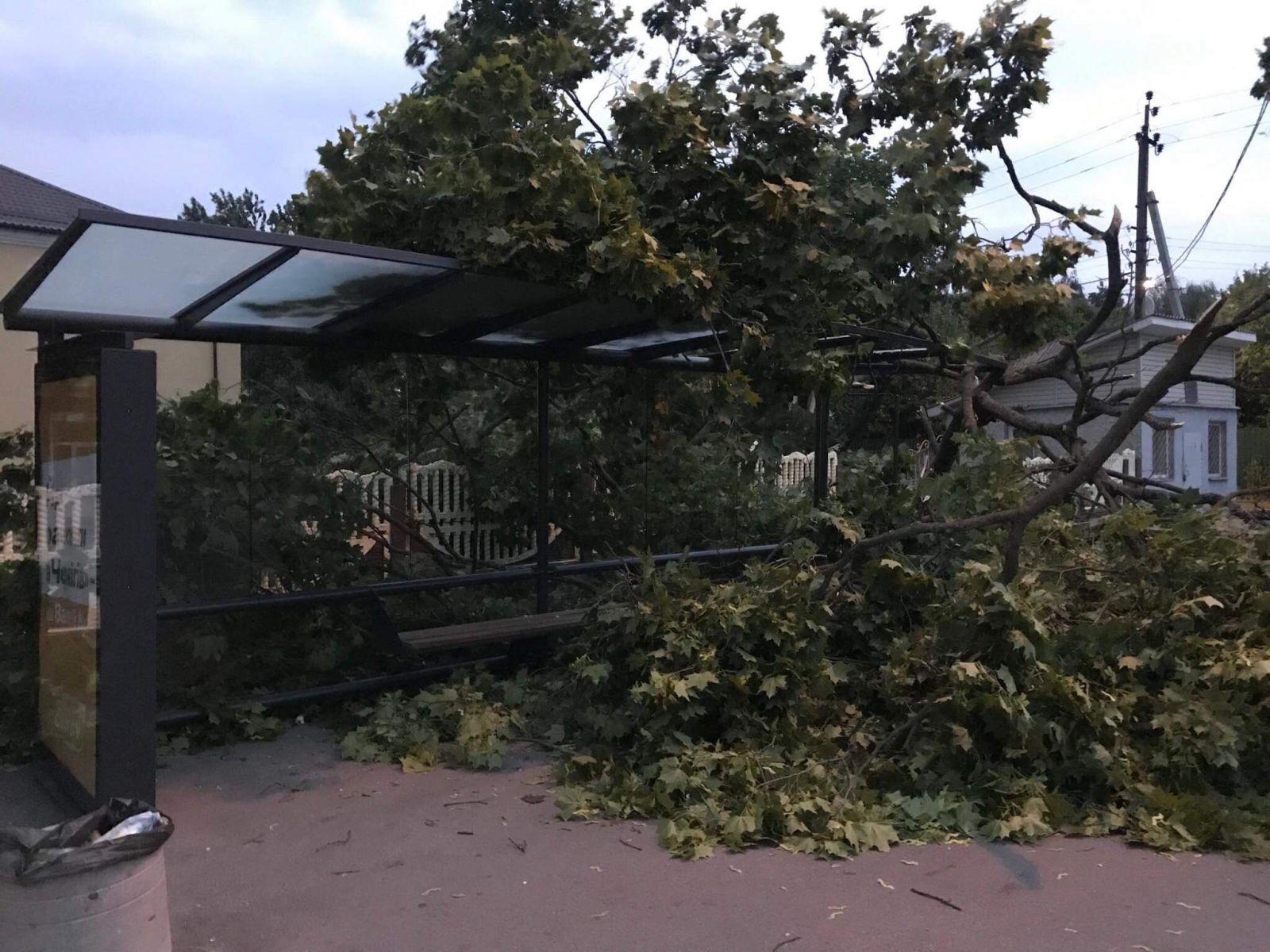 Ураган в Чернигове: упавшее дерево травмировало женщину