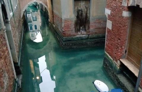 Без людей природе лучше. В чистых каналах Венеции завелись лебеди и дель...