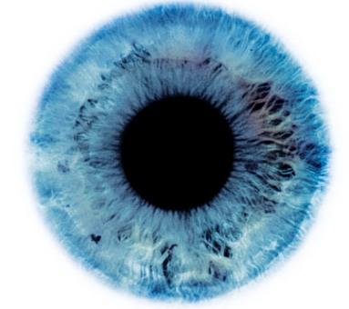 Слепоту будут лечить эмбриональными стволовыми клетками