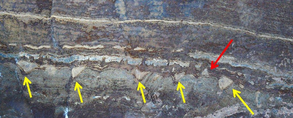 Ученые доказали, что жизнь на Земле зародилась 3,5 млрд лет назад