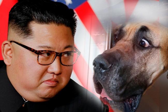 Буржуазная привычка: в Северной Корее запретили держать домашних собак