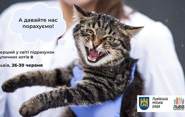 Во Львове впервые в мире пересчитают бродячих котов
