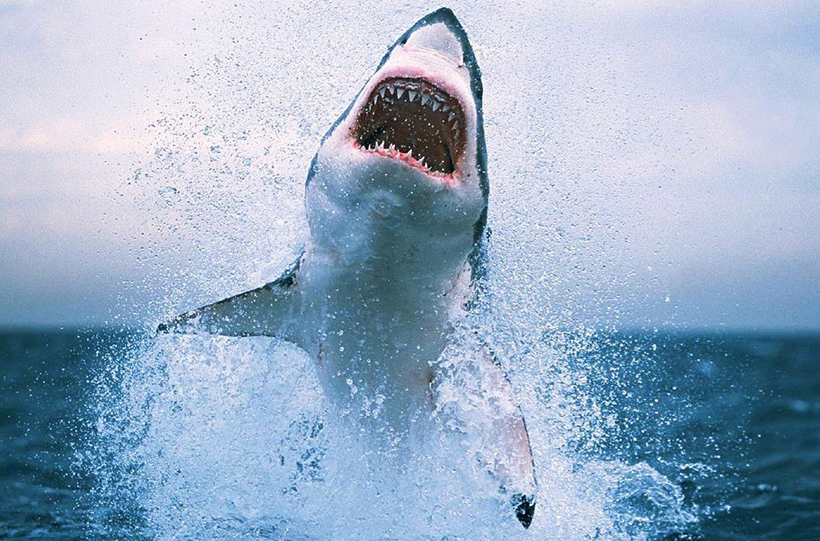 """Огромная акула устроила """"олимпийское"""" выступление для рыбаков"""