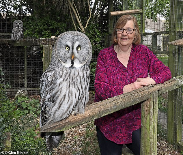 """""""Жертвы Гарри Поттера"""": британская бабушка устроила приют для 54 брошенн..."""