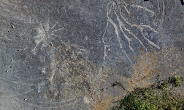 Сосны с папоротниками вместо иголок. Найден самый древний ископаемый лес...