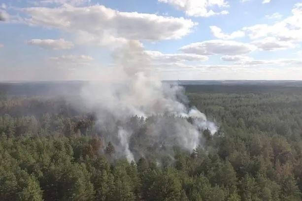 На месте пожара в Луганской области осталась тлеть древесина и лесная по...