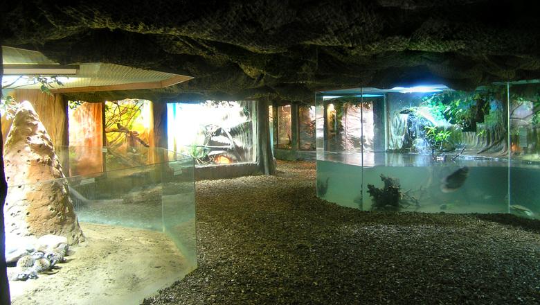 В аквариум чешского зоопарка специально добавили пластиковый мусор