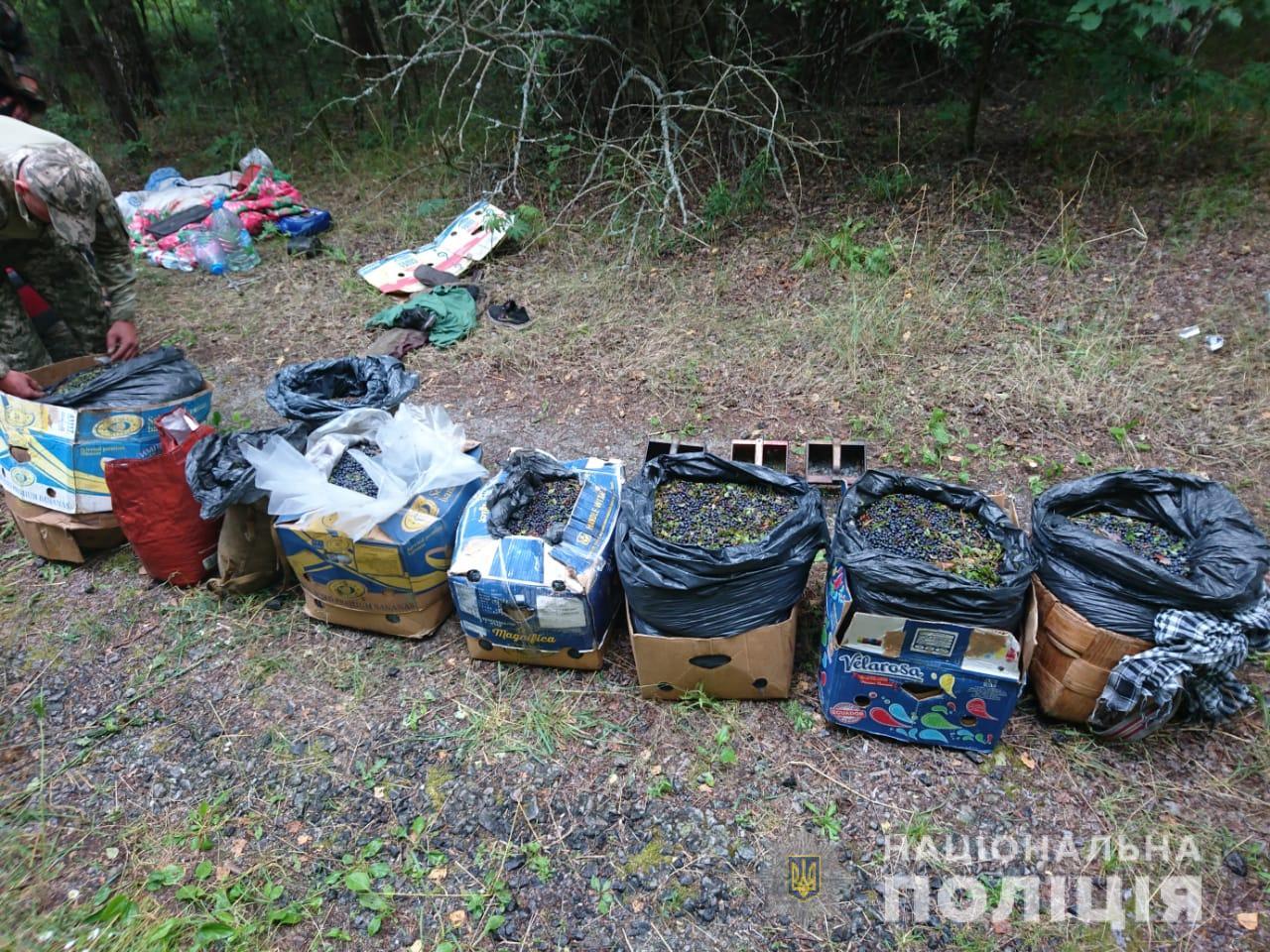 Из Чернобыльской зоны пытались вывезти 300 кг радиоактивных ягод и 20 кг...