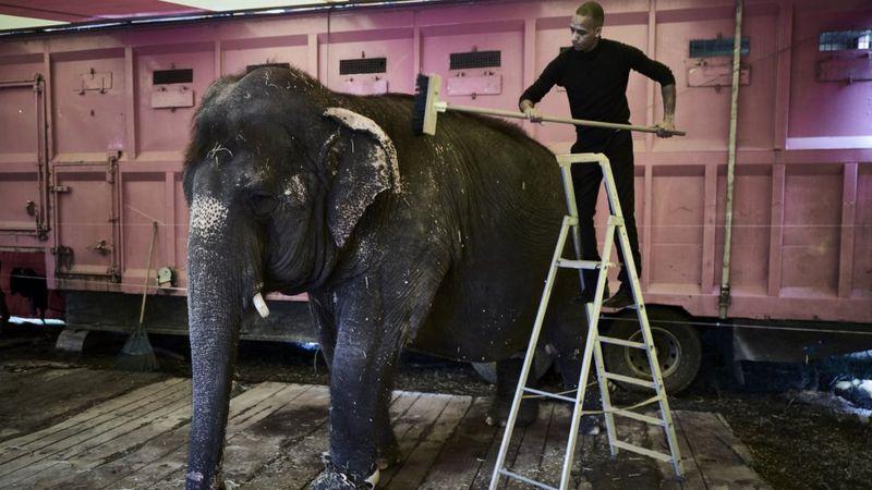Во Франции запретят использование диких животных в цирках