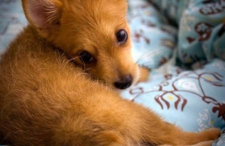 Киевляне просят ветеринаров уберечь их питомцев от гриппа
