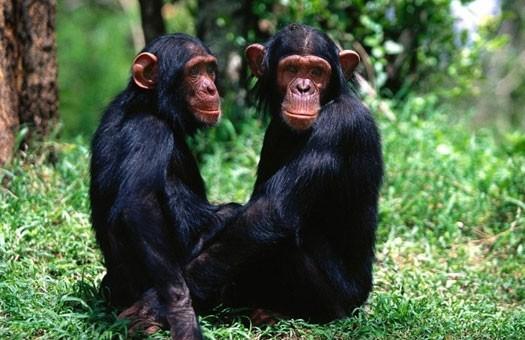 В Киевском зоопарке обезьянам объявили карантин