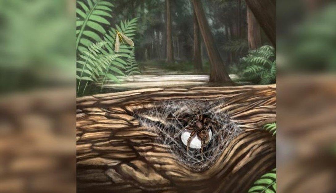 Древняя самка паука Lagonomegopidae перед тем, как погибнуть. Иллюстрация.
