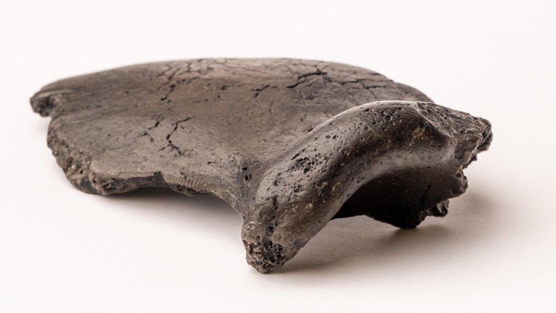 Часть черепа неандертальца.