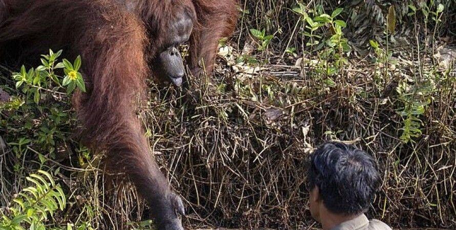 Фото: Anil Prabhakar/SWNS.com