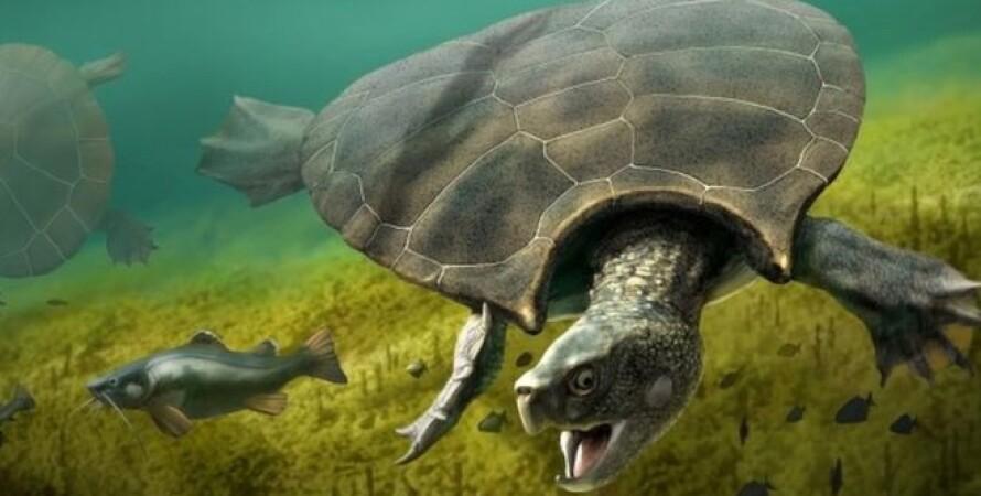 черепаха, вымирание, выживание, глобальное потепление, изменения климата