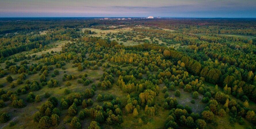 природа, Чернобыльский заповедник, биосфера