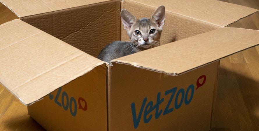 кіт, коробка, замкнутий простір, фото