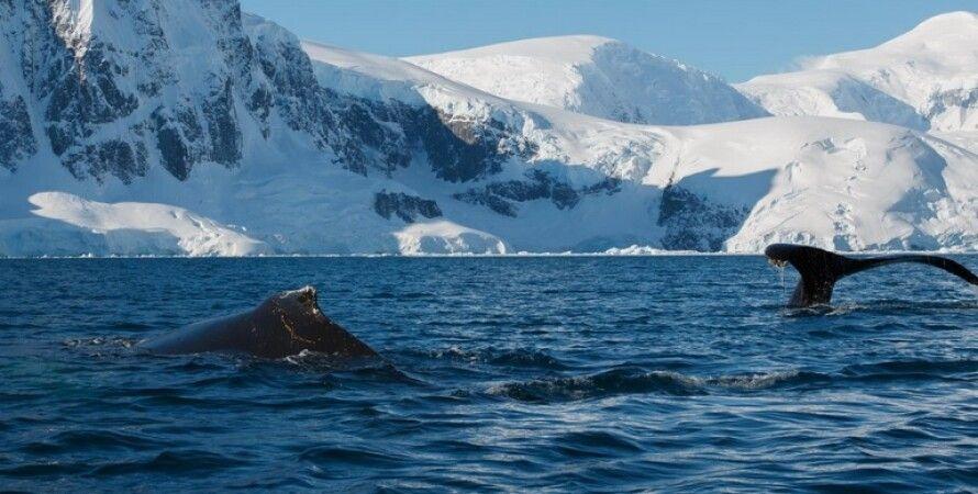 Антарктида, полярники, кит, океан, експедиція, зимівля