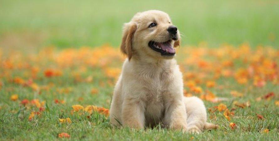 щенок, трава, фото