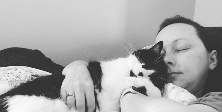 кот, рак, хозяйка