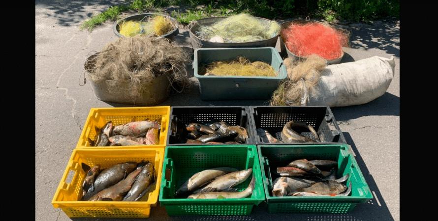 рыба, сети, полиция, фото