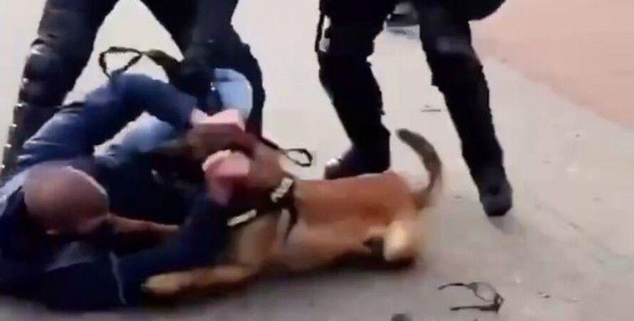 Нідерланди, Гаага, COVID-протест, учасники мітингу, поліція, розгін, собаки,