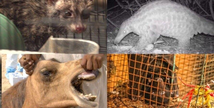переносчики, млекопитающие, коронавирус, ИИ