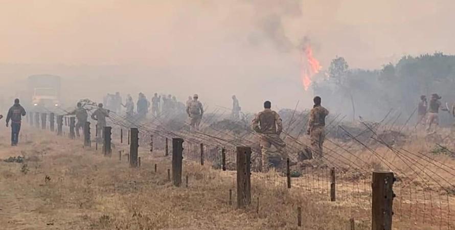 заповедник, пожар, кения, британские военные, погибший слон, слон, Лоллдайга