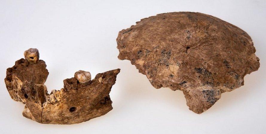 Челюсть и череп неандертальца