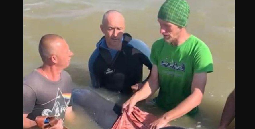 Дельфін, Херсонська область