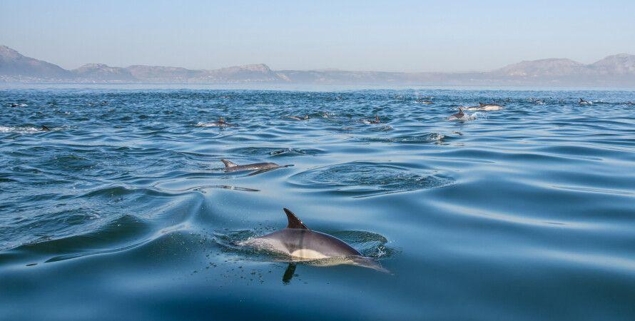 океан, вода, дельфины
