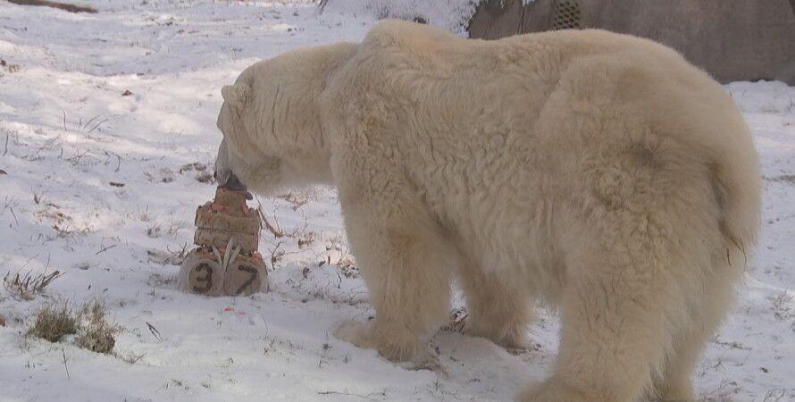 Снежок угощается праздничным тортом / Скриншот: youtube / Philadelphia Zoo