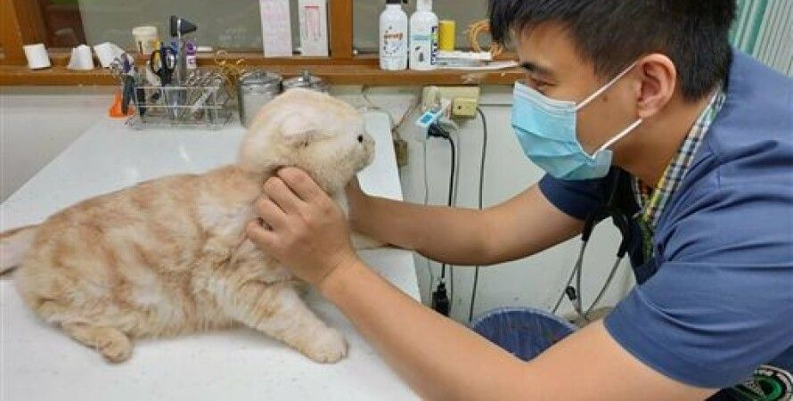 Фото: New Taipei City Animal Protection and Health Inspection Office
