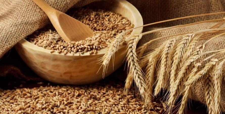 зерновые, урожай, украина, 2020