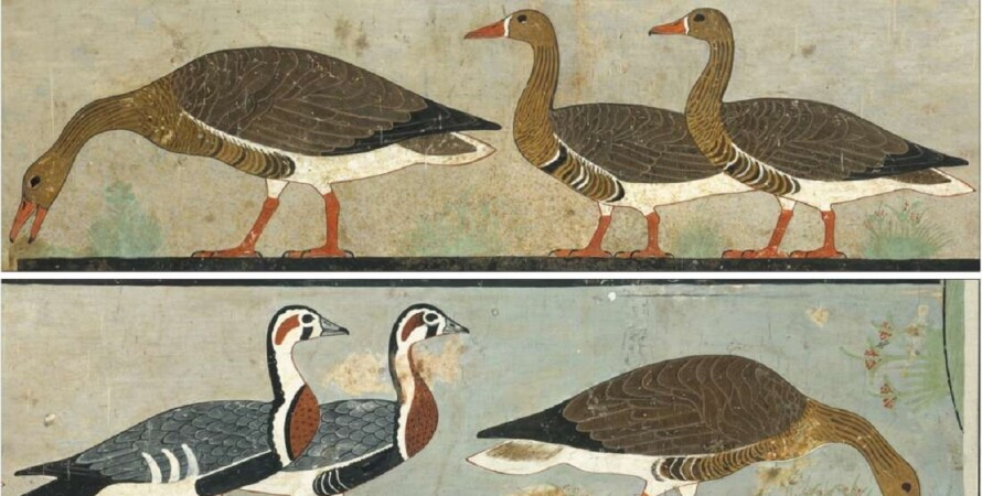 гуси, Древний Египет, рисунки