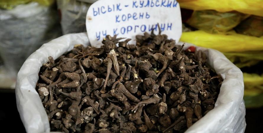 Киргизстан, коронавірус, лікування, Іссик-кульський корінь,