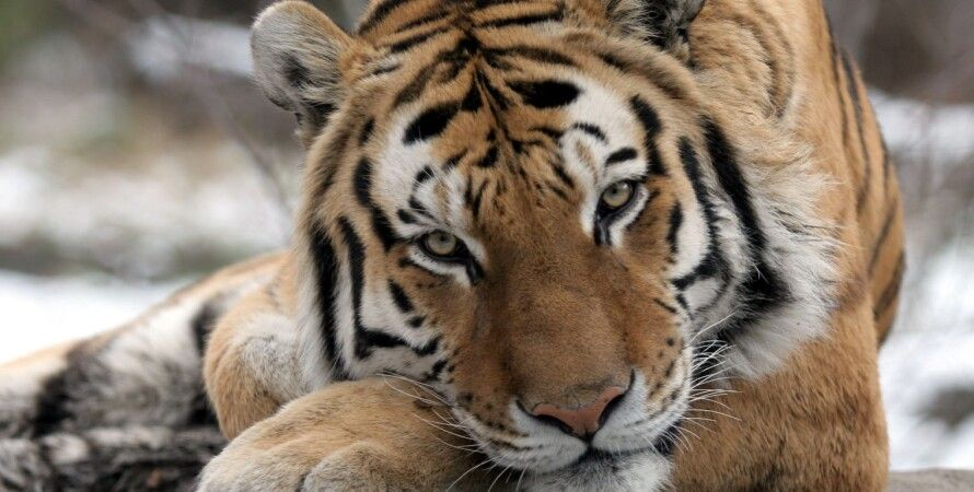 Фото: Bronx Zoo