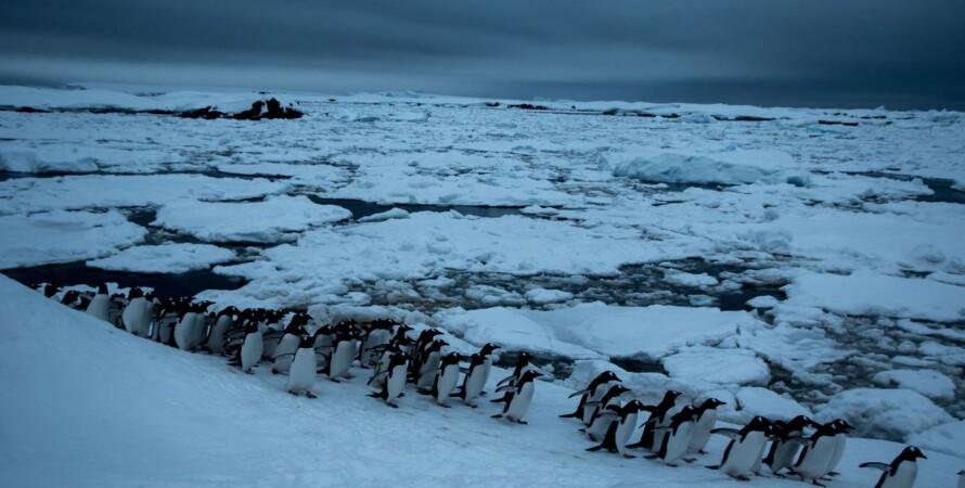Фото: facebook.com/AntarcticCenter