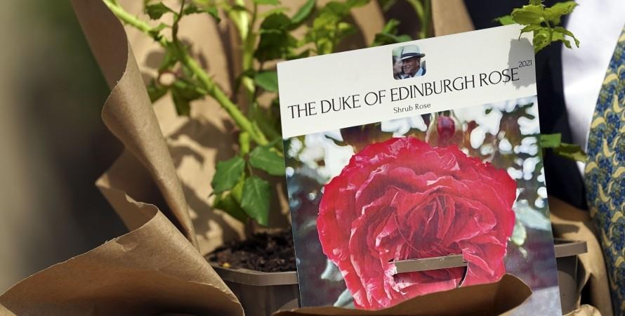 роза. сорт, герцог Эдинбургский