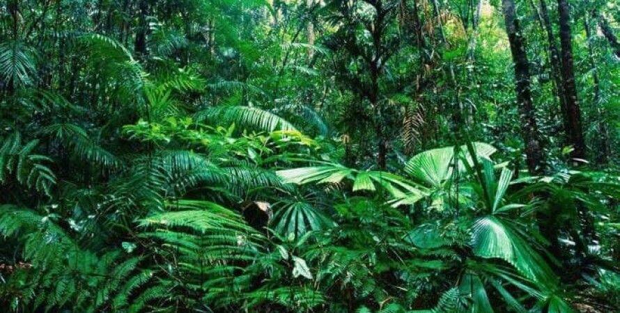 амазонка, лес, бразилия, вырубка леса, экология