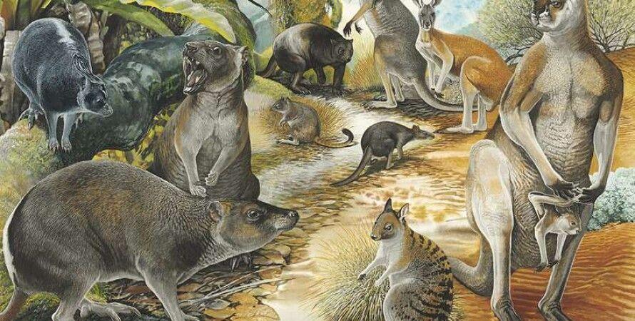 Peter Shouten/Australian Geographic