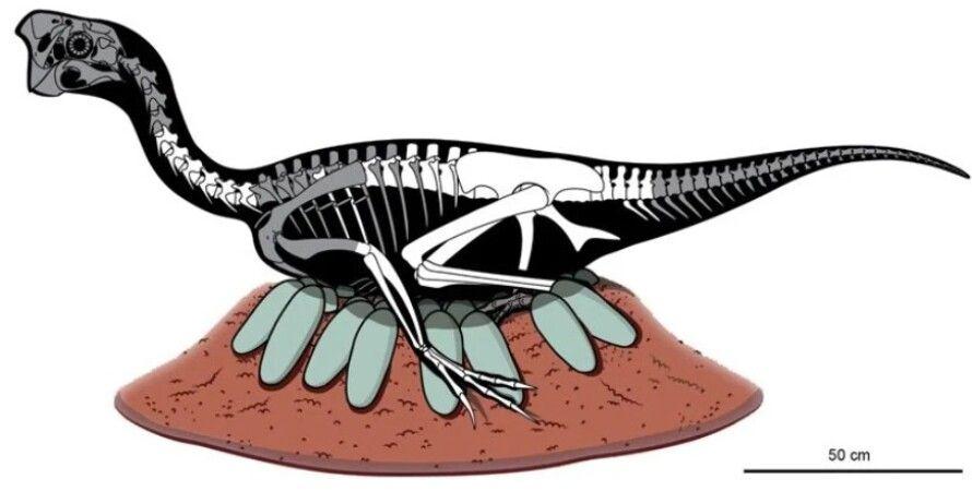 динозавр, овираптор, яйця