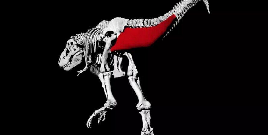 тираннозавры, ходьба, динозавры