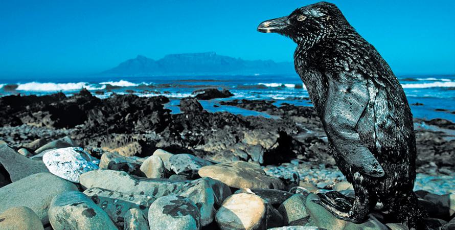 нефть, пингвин, климат, загрязнение, соглашение, парижское