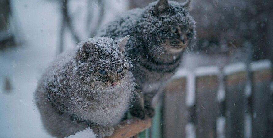 зима, холода, морозы, синоптики, прогноз, похолодание,